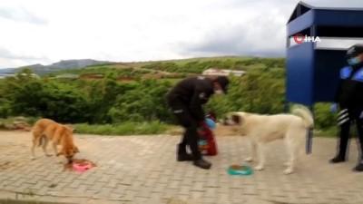 akarca -  Tunceli'de sokak hayvanları Vefa grubuna emanet