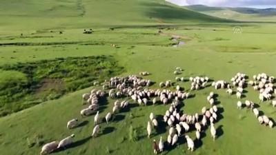 85 yaşındaki Süleyman dedenin bitmeyen çobanlık tutkusu - ORDU