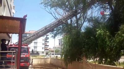 cagri merkezi -  Ağaçta ayağına ip dolanan karga itfaiye ekipleri tarafından kurtarıldı