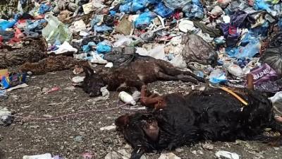 kiz kardes -  Ormanda büyük şok: Çakal, karga, tilki ve köpeği telef olmuş halde buldular