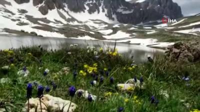 dag kecisi -  Munzur'da saklı cennet