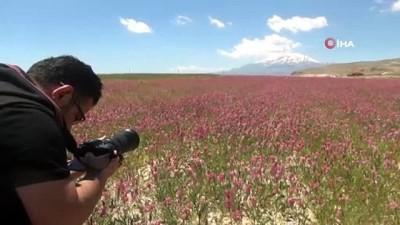 -  Van Gölü çevresi çiçeklerle renklendi