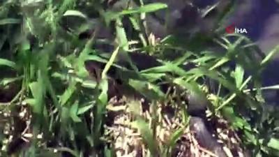 kapali alan -  Ülke genelinde yılan paniği