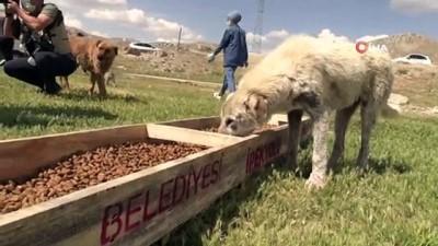 İpekyolu Belediyesi ve Haçiko Derneğinden sokak hayvanlarına mama desteği