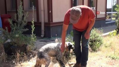 Kahraman aile hekiminden yaralı köpeğe müdahale