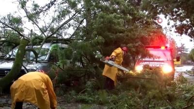 Sakarya'da park halindeki aracın üzerine ağaç devrildi