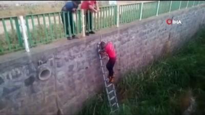 Tahliye kanalına düşen yavru köpekler kurtarıldı