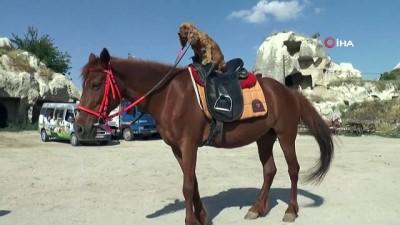 yabanci turist -  Köpeğin at üzerinde Kapadokya keyfi