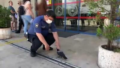 polis memuru -  Sevimli karga Marmaris Adliyesi'nin maskotu oldu