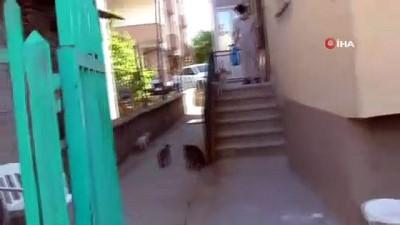 Sokak kedileri mobilya ustasının yolunu gözlüyor