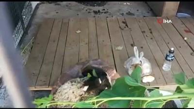 icmeler -  Marmaris'te çöpe atılarak ölüme terk edilen koça belediye sahip çıktı