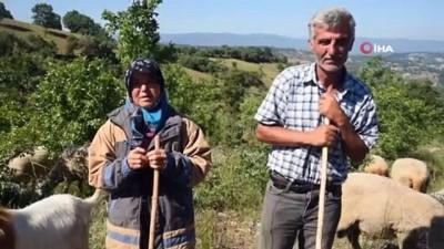 Cumhurbaşkanı Erdoğan'ın koyunlar için aradığı vatandaş konuştu...'Cumhurbaşkanımız hem analık hem babalık yaptı bize'