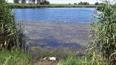 Tekirdağ'da esrarengiz balık ölümleri