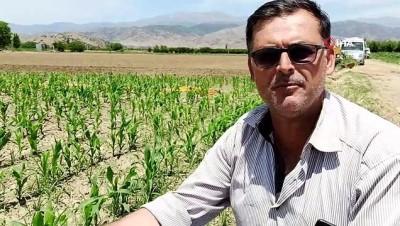 Ödemiş'te mısır üretimi artıyor