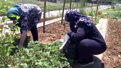 kitap okuma -  Tuzla'da 65 yaş ve üstü vatandaşlar bahçede çapa yaparak ürün topladı