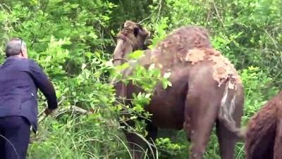 Liseli Selvi pandemi sürecini develeriyle ilgilenerek geçiriyor - SAMSUN