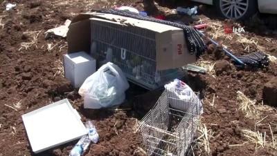 trafik kazasi -  Kazazede kuşlar güneşten kartonla korundu