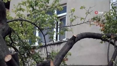 Evinin misafir odasını kuşlara bıraktı