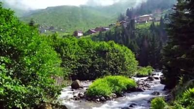 sosyal medya - Kaçkar Dağları'nın büyüleyen güzelliği: Bulut Denizi - RİZE