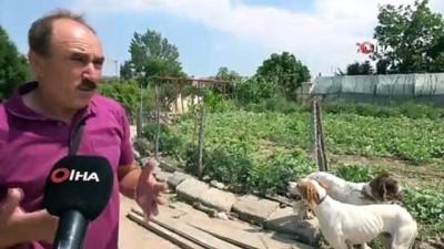 Köpekleri traktöre bağlayan adam yaşananları anlattı