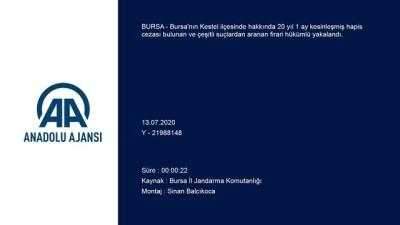 Bursa'da firari hükümlü kenevir yetiştirdiği bahçede yakalandı