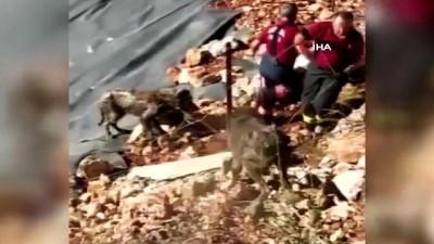 Zifte saplanan köpekler kurtarıldı