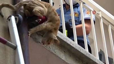 kurtarma operasyonu -  Bursa'da nefes kesen kedi kurtarma operasyonu
