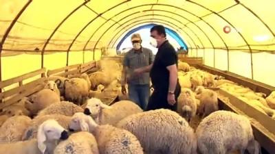 """TÜDKİYEB Genel Başkanı Çelik: """"Eğer karkas olarak 16 kilo et veren bir koç varsa getirsinler biz de görelim"""""""