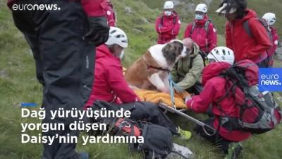 kurtarma operasyonu - Dağ yürüyüşünde yorgun düşen köpek için kurtarma operasyonu