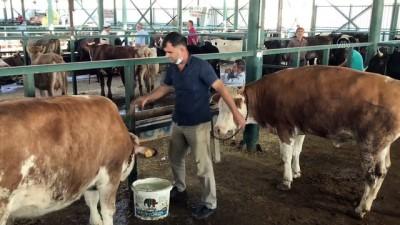 alisveris - Hayvan pazarlarında satışlar Kovid-19 tedbirleriyle sürüyor - ESKİŞEHİR