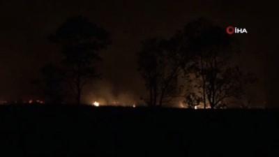 hayvan -  Sazlık alanda başlayan yangın şiddetli rüzgâr nedeniyle ormana sıçradı