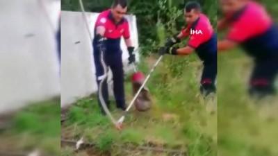 irak -  Evin bahçesindeki yılan panik yaşattı