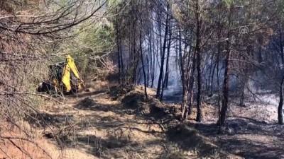 ormanli - Orman yangını (2) - SAKARYA