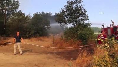 ormanli - Orman yangını (3) - SAKARYA