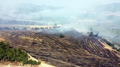 ormanli - Orman yangını - SAKARYA