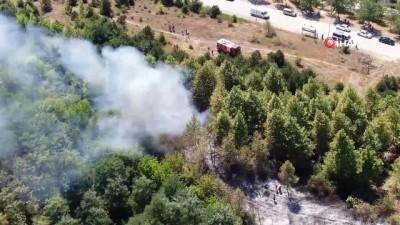 ormanli -  Düzce'de orman yangını: 4 hektar alan kül oldu