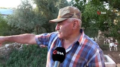 sayilar -  Köye inen ayılar 2 bin liralık bal yedi, görüntüler kameralara yansıdı