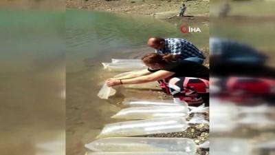 irak -  Mersin'de otobüsün bagajında 2 bin 500 adet doktor balığı ele geçirildi