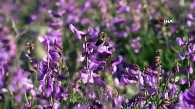 Arıcılar yüksek kaliteli bal için hasadı 20 gün geciktirdi