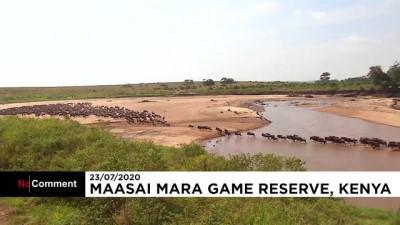 euronews - Öküz başlı antilopların Tanzanya'dan Kenya'ya göçü