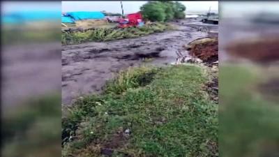 yukselen - Sele kapılan dananın sudan çıkma mücadelesi görüntülendi - ARDAHAN