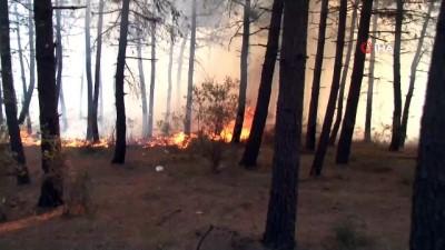 - Aydos Ormanında çıkan yangınla ilgili bir kişi gözaltına alındı