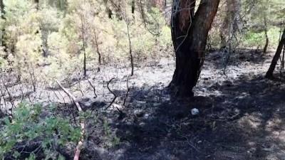 Orman yangını kontrol altına alındı (2) - DENİZLİ