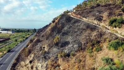 Söke'de yanan ormanlık havadan görüntülendi - AYDIN