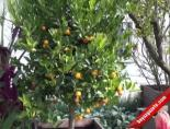 Dünya Botanik Exposu'nun Bayrağı Türkiye'de
