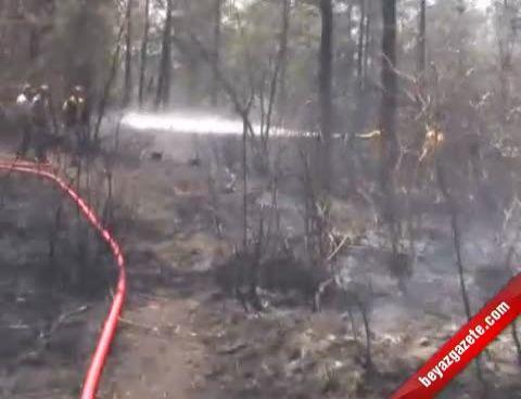 cavusbasi - İstanbul Beykoz'da Orman Yangını