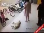 Köpeğe Tekme Atınca Bakın Ne Oldu