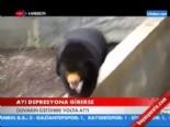 depresyon ilaci - Ayı depresyona girerse