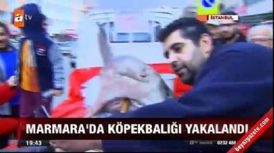 Marmara Denizi'nde 3.5 metrelik köpek balığı! Tam 700 kilo