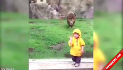 Aslan çocuğa böyle saldırdı